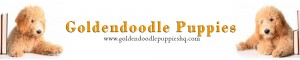 Goldendoodles & More!
