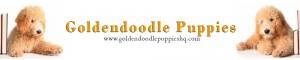 Goldendoodles & More!